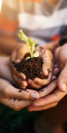 Hands holding dirt and green plant